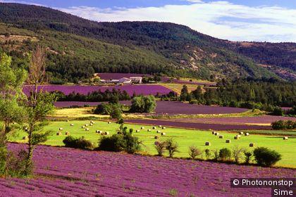 Provence-Alpes-Côte d'Azur, Sault, Provenza