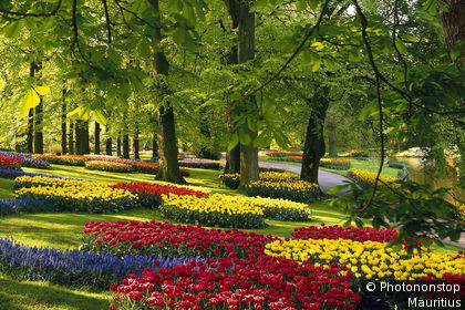 Lisse, view of Keukenhof Gardens, beds of tulips