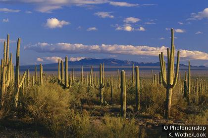 Paisaje del desierto de Sonora