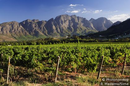 Vineyards in Franschhoek