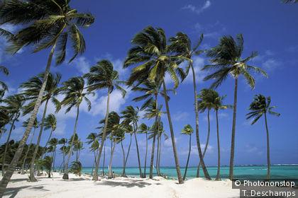 Beach on Saona Island