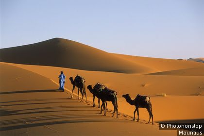 Caravan in the Erg Chebbi Dunes