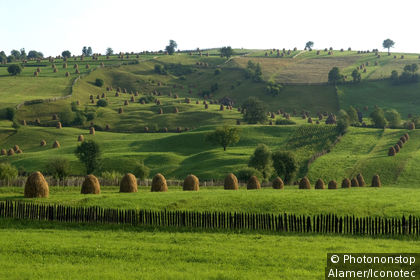 Landscape of the Bucovina region