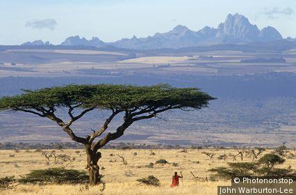 Kenya, Laikipia, guerrier masaï près d'un acacia, Mont Kenya en arrière-plan