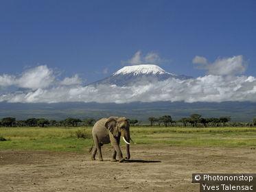 Kenya, Parc Amboseli, Kilimandjaro, éléphant
