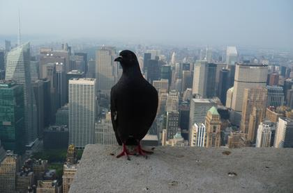 New York desde Empire State