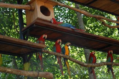 Iguaço-Parque das Aves