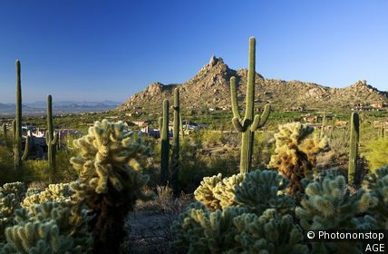 États-Unis, USA, Arizona, Scottsdale, Landscape with Pinnacle Peak