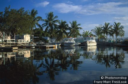 Motor boats at harbour in front of palm trees, Key Largo, Florida Keys, Florida USA, America
