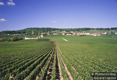 Hautvillers, vignes