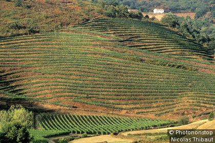 64.Pays Basque, Basse Navarre, vignoble de Irouleguy, region de saint Etienne de Baigorry