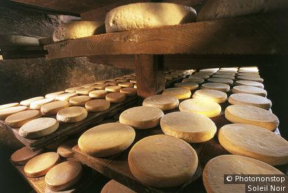68. Munster, intérieur cave, fromages alignés en cours d'affinage