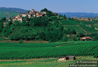 France, Rhône (69), Rhône Alpes, Ternand. Vigne et village