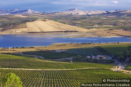 Italie, Sicile, Sambuca di Sicilia, Zone Méditerranéenne, Province de Agrigento - Arancio Lake, Planeta winery, Ulmo vineyard