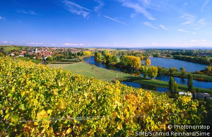 Germany / Bavaria, Bayern / Dettelbach / View of Main and vineyards, Unterfranken