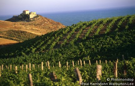 Eraclea Monoa, Sicily, Italy. Italy, Sicily, Eraclea Monoa. Vineyards near the coast at Capo Bianco.