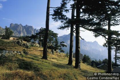 Corse du sud, Bavella, conifères sur versant de montagne, maison