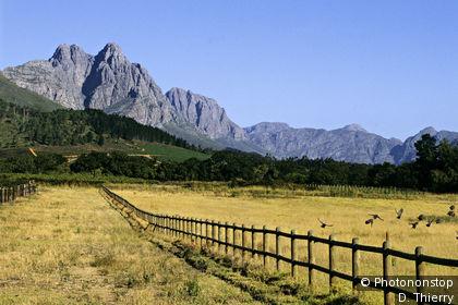 Paysage de Stellenbosch