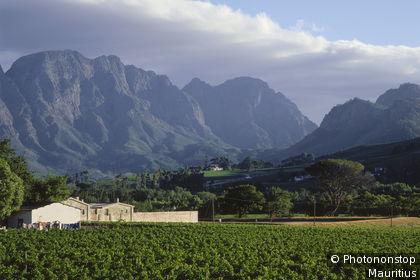 Vignes à Franschhoek
