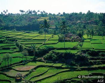 Indonesia, Lombok, Tetebatu / Rice Fields