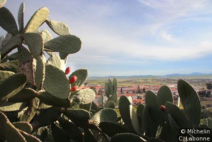 Premier plan cactus, paysage et le village en arrière-plan