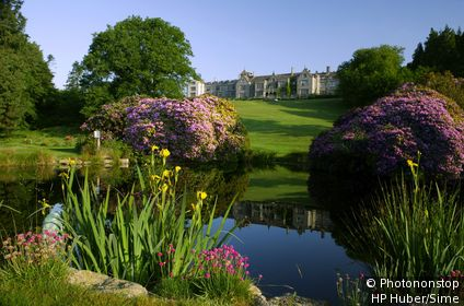 Royaume-Uni, Angleterre, Grande-Bretagne - South of England, Dartmoor National Park, Moretonhampstead, Rhododendrons in Bovey Castle Park