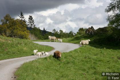 Le Perthshire et ses moutons.