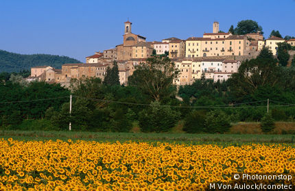 Italy, Tuscany, Sunflower field in front of town of Monterchi.