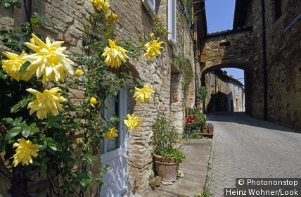 Flowers at a house, Murlo, Tuscany, Italy, Europe