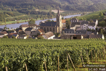 Luxembourg, Vallée de la Moselle, Wormeldange, vue générale village depuis vignes verdoyantes au 1er plan