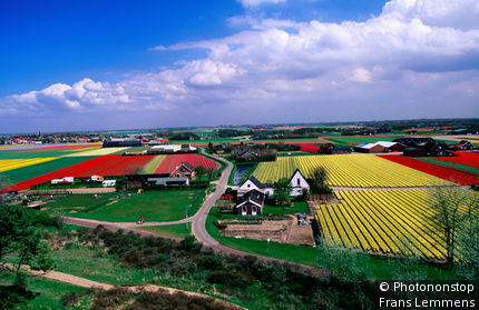 Netherlands, North Holland, Egmond-Binnen, Tulip fields and farmhouses.
