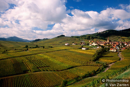 Village and vineyards in Alsace's Weidbach Valley