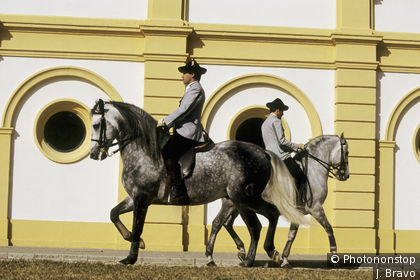 Royal Andalusian School in Jerez de la Frontera