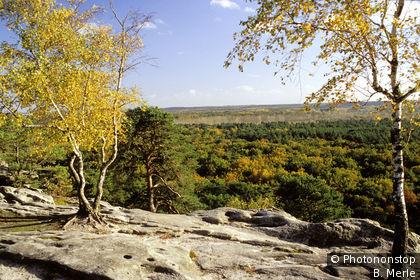 Forêt de Fontainebleau en automne, panorama des rochers de Dame Jouanne