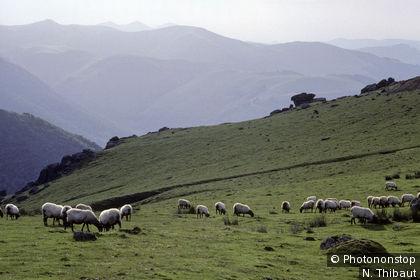 Paysage du Pays Basque dans la région de Saint-Jean-Pied de Port