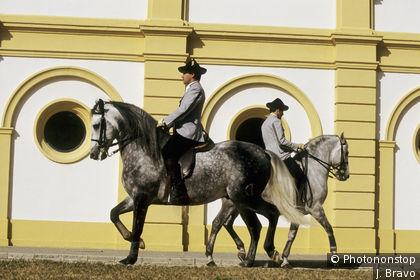 Ecole royale andalouse à Jerez de la Frontera