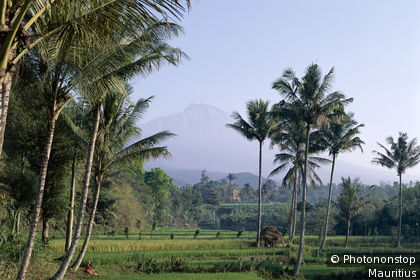 View of Mt Rinjani from a paddy field