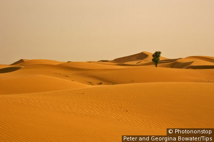 Emirtas Arbes Unis, Dubai. dunes de sable