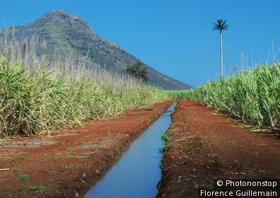 Ile Maurice, Riviére Noire, Tamarin, rigole d'eau à travers un champ de canne à sucre, montagne de la Tourelle et antenne de téléphonie en forme de palmier