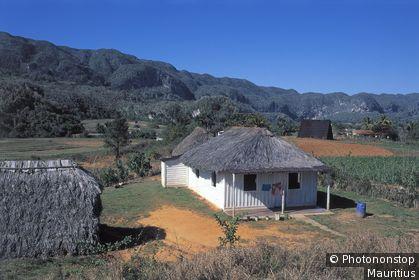 Kuba, Vinales, Felder, Hütte Mittelamerika, Westindische Inseln, Insel, Landschaft, Anbau, Landwirtschaft