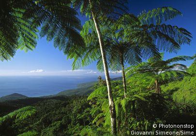 Antilles françaises, Guadeloupe, Basse-Terre, Deshaies, bord de mer
