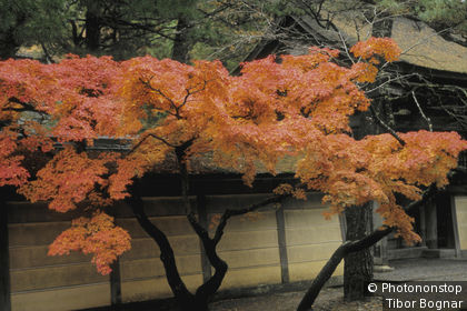 Japon, Kansai, Koya-san, arbres en automne