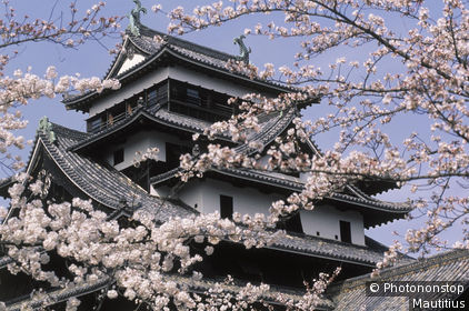 IN*Japon, Honshu, Matsue, parc Shiroyama, chateau, cerisiers en fleurs au premier plan
