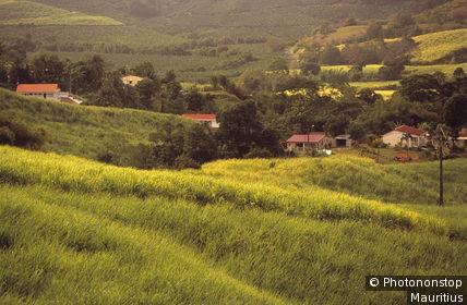 Karibik, Französische Antillen, Martinique, La Trinite, Zuckerrohrfelder Mittelamerika, Westindische Inseln, Kleine Antillen, Insel, Landwirtschaft, Wirtschaft, Anbau, Felder, Zuckerrohr, Zuckerrohranbau