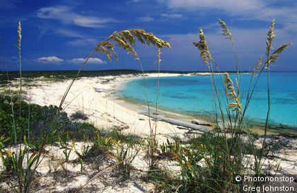Sea oats on a pristine beach.