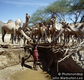 Kenya;Maralal;Milgis - A Samburu man waters his camels from a Waterhole his family has dug in the Milgis lugga - a wide, seasonal watercourse that is a lifeline for pastoralists living in the low-lying, semi-arid region of Samburuland