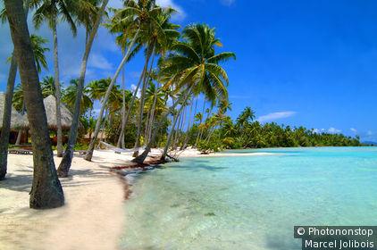 Polynésie française, Bora-Bora, plage avec palmiers