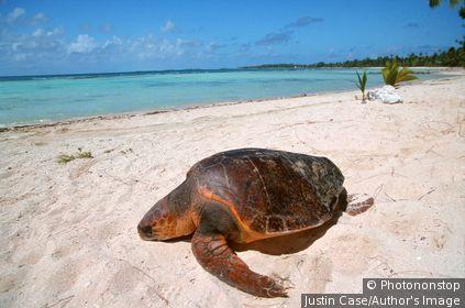 Polynésie Française - Tikehau's atoll - Tuamotu