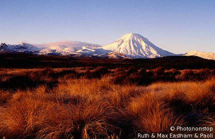 Grass coverd plain with snow-covered Mt Ngauruhoe in background. Tongariro National Park, Manawatu-Wanganui,North Island, New Zealand