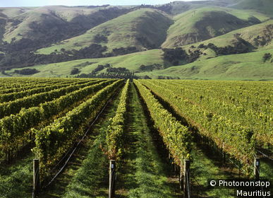 Nouvelle Zélande, ile du nord, Martinbourough, Craggy Range, vignes